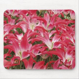Cojín de ratón de las fotos del tulipán tapete de raton