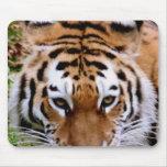 Cojín de ratón de las marcas del tigre alfombrilla de ratón