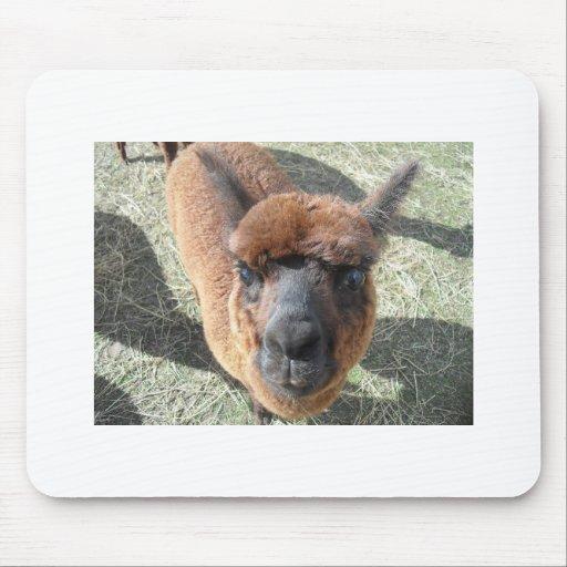 Cojín de ratón de los amantes de la alpaca tapete de ratón