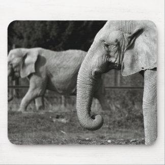 Cojín de ratón de los elefantes asiáticos tapete de ratón