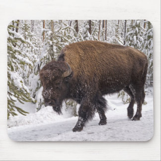 Cojín de ratón del bisonte americano (bisonte del  tapetes de ratón