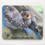 Cojín de ratón del Bluebird Tapete De Ratones