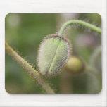 Cojín de ratón del brote de flor salvaje tapetes de ratones