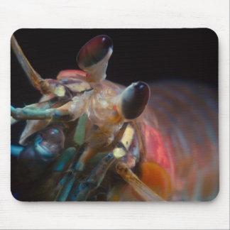 Cojín de ratón del camarón de predicador alfombrillas de ratón
