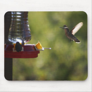 Cojín de ratón del colibrí alfombrillas de ratón