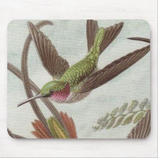 Cojín de ratón del colibrí de Ernst Haeckel Mouse Pads