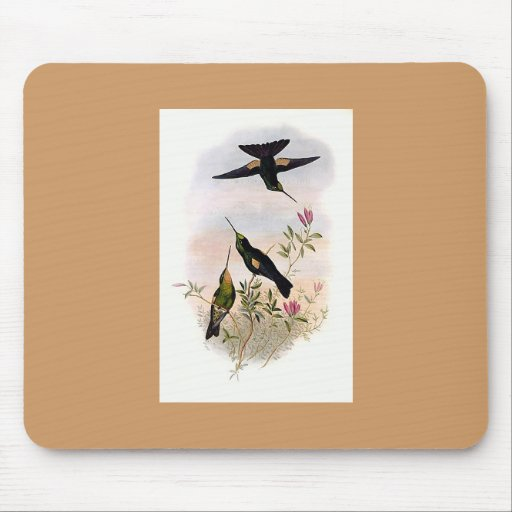 Cojín de ratón del colibrí de Gould - de Comte de  Alfombrilla De Ratones