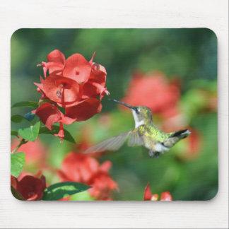 Cojín de ratón del colibrí tapete de raton