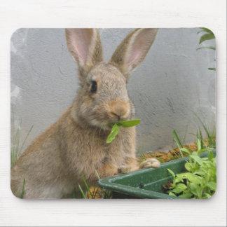 Cojín de ratón del conejo de conejo de rabo blanco alfombrillas de raton