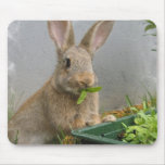 Cojín de ratón del conejo de conejo de rabo blanco tapete de raton
