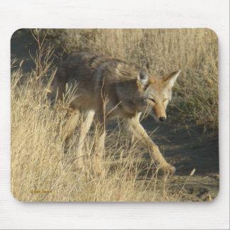 Cojín de ratón del coyote R0014 Alfombrilla De Raton