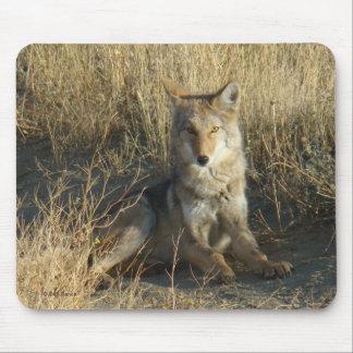 Cojín de ratón del coyote R0015 Tapetes De Ratones