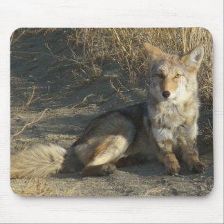 Cojín de ratón del coyote R0019 Tapetes De Raton