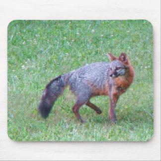 Cojín de ratón del Fox gris del PA Tapetes De Raton