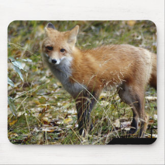 Cojín de ratón del Fox Tapete De Ratón