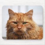 Cojín de ratón del gato de Coon de Maine Alfombrillas De Raton