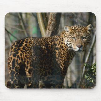 Cojín de ratón del gato de Jaguar Tapete De Ratón