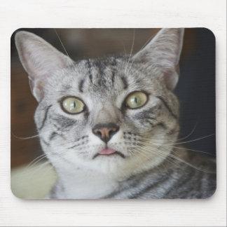 Cojín de ratón del gato de Mau del egipcio Tapetes De Raton