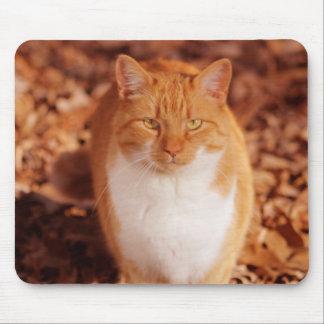 Cojín de ratón del gato de Tabby del jengibre Mousepads
