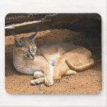 Cojín de ratón del gato tapete de raton