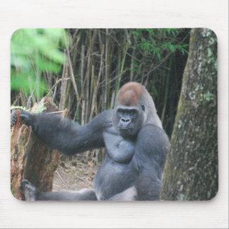 Cojín de ratón del gorila del Silverback que se si Tapete De Raton