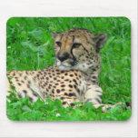 Cojín de ratón del guepardo tapete de ratón