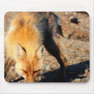 Cojín de ratón del hábitat del Fox rojo Tapetes De Raton