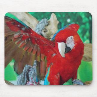 Cojín de ratón del Macaw del escarlata Alfombrillas De Ratón