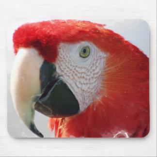 Cojín de ratón del Macaw del escarlata Tapetes De Ratón