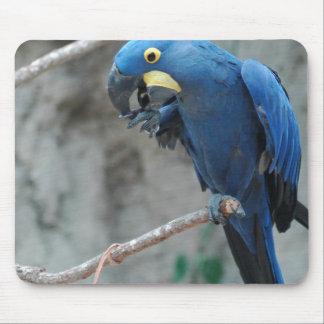 Cojín de ratón del Macaw del jacinto Alfombrillas De Ratones