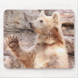 Cojín de ratón del oso que agita tapetes de raton