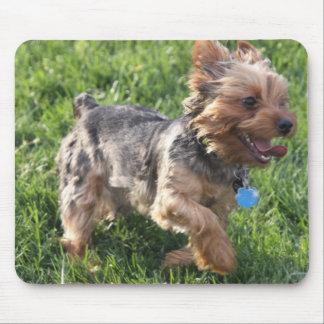 Cojín de ratón del perro de York Terrier Tapetes De Ratones