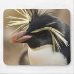 Cojín de ratón del pingüino de Rockhopper Alfombrillas De Ratones