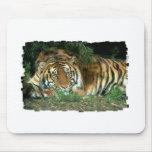Cojín de ratón del tigre de Bengala Alfombrilla De Ratón