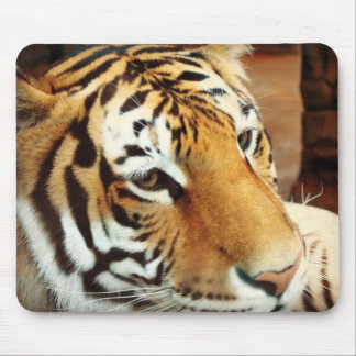 Cojín de ratón del tigre siberiano tapete de ratones