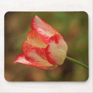Cojín de ratón del tulipán del Dos-Tono Alfombrillas De Ratones