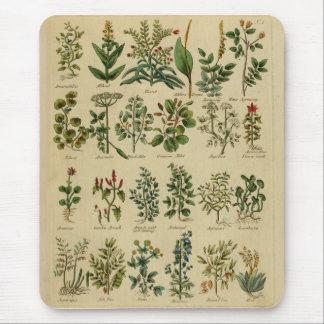 Cojín de ratón herbario del vintage tapetes de raton