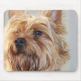 Cojín de ratón lindo de Yorkshire Terrier Alfombrillas De Raton