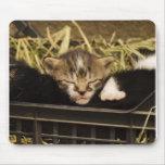 Cojín de ratón lindo del gatito alfombrillas de ratón