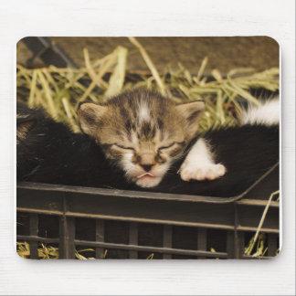 Cojín de ratón lindo del gatito mousepad