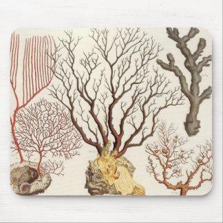 Cojín de ratón náutico coralino de la decoración d