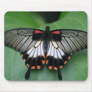 Cojín de ratón negro y rosado de la mariposa de Sw Tapetes De Ratones