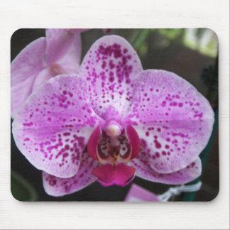 Cojín de ratón púrpura grande de la orquídea tapete de ratones