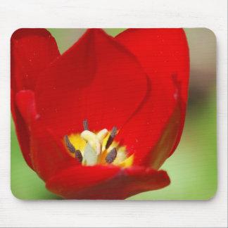 Cojín de ratón rojo de los tulipanes tapete de ratones
