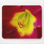 Cojín de ratón rojo del primer de la flor alfombrillas de raton