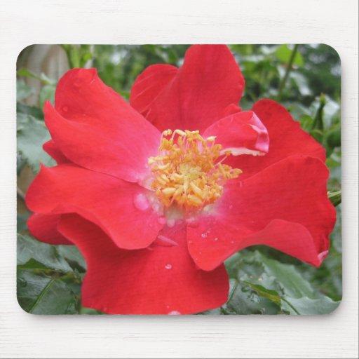 Cojín de ratón: Rosa rojo Tapetes De Ratones