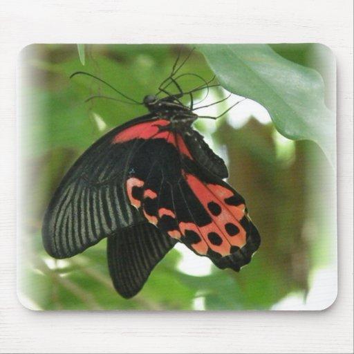 Cojín de ratón tropical de la mariposa alfombrillas de ratones