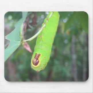 Cojín de ratón verde de la oruga alfombrillas de ratón