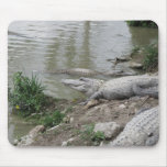 Cojín del cocodrilo tapete de ratón