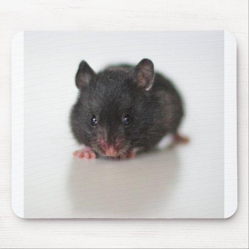 Cojín del hámster alfombrilla de ratones